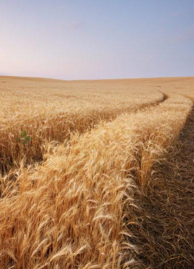 Транспортировка сельхозтехники